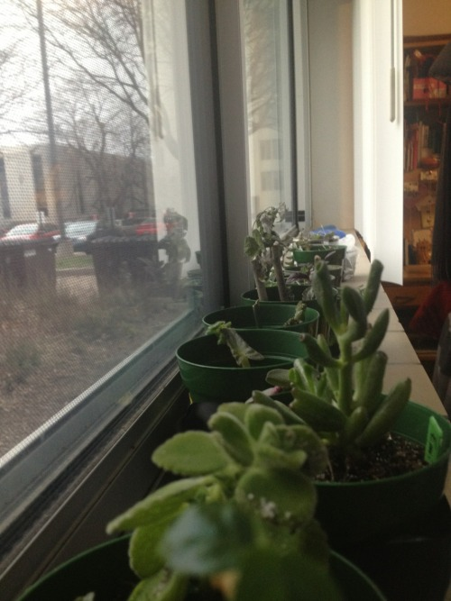 I need help. There are 23 plants sitting on my windowsill. I had 10 before this afternoon.   I need an intervention.