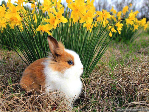 spring!Aww there is a animal there its a bunny!Bunny in spring!Cute love this picture! <3