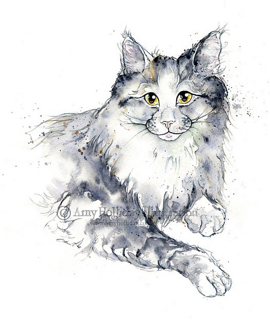 A Mildly Modest Maine Coon on Flickr.