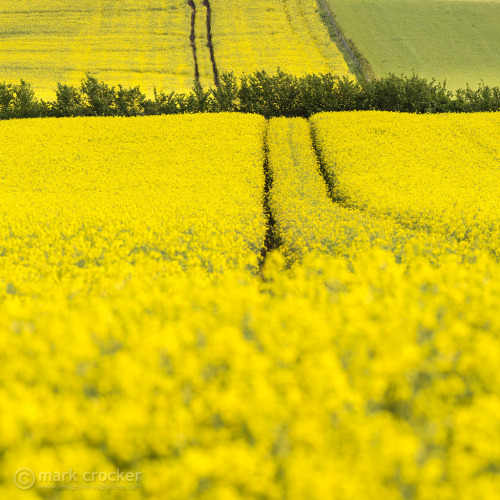 Golden Tractor trails (by images through a lens)