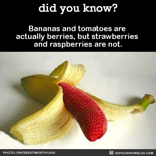 did-you-kno-bananas-and-tomatoes-are-actually