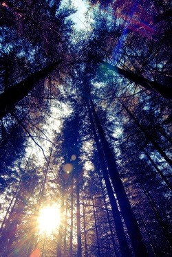 love photography beautiful dope like perfect follow follow me trees fresh lovely peaceful happiness nature outdoors peace forest nice sunshine freedom love this hippies Sunlight good vibes free spirit Photo of the Day the sky tall trees follow me please colorful sky
