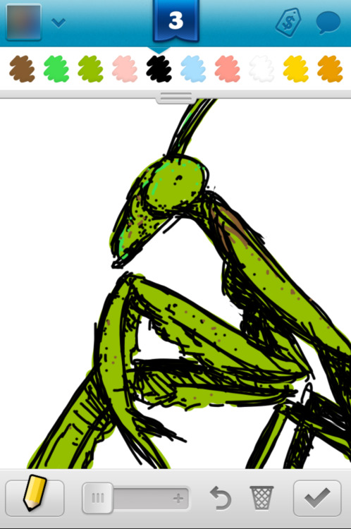 Draw Something 2, 96, 2013 Word: Mantis