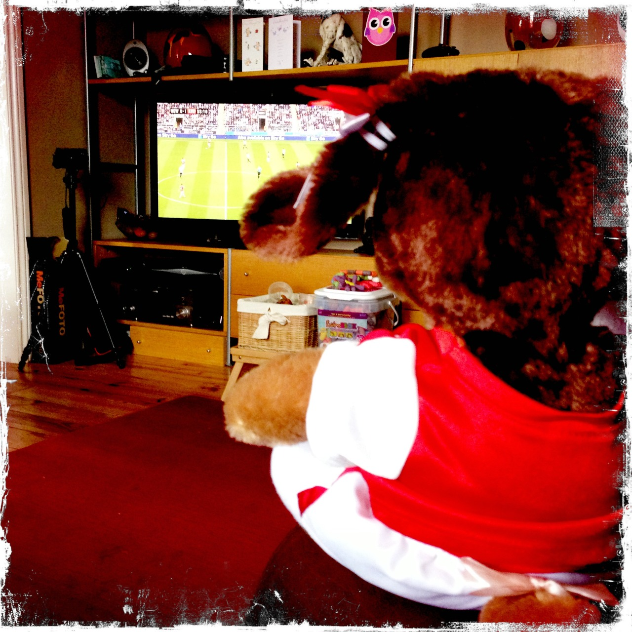 Mitsi glued to the footie… #afc