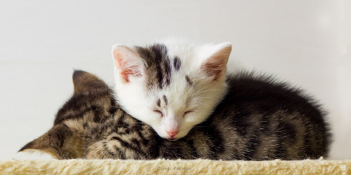 llbwwb:   Sweet dreams and cuddles beautiful friends:) Kitten Cocktail by *hoschie.