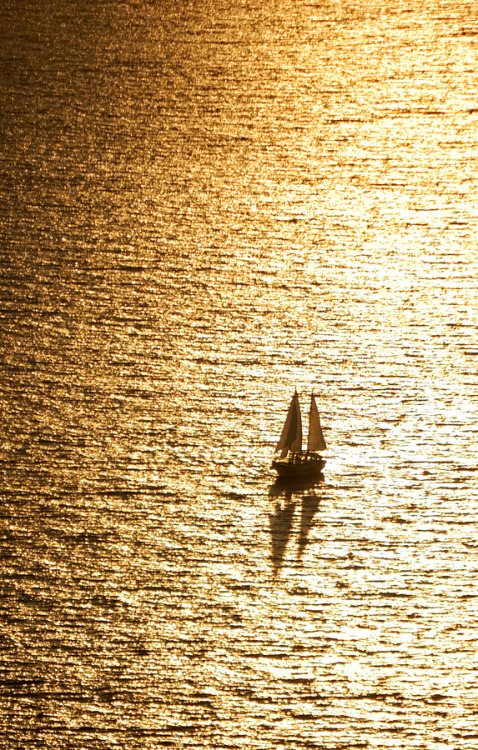0mnis-e:  Golden Sailing, By Csilla Zelko.