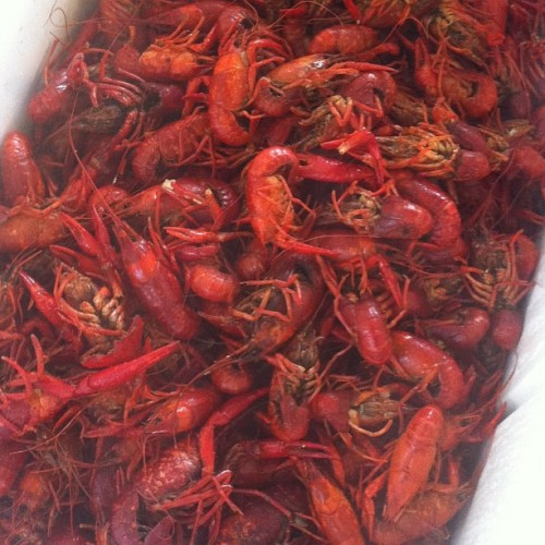 Boiled Crawfish. Oh, and mint juleps and beer… #crawfish #nofilter