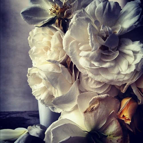 instagram.com/showstudio_nick_knight