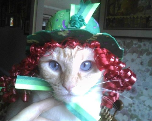 catsbeaversandducks:  Happy St. Patrick's Day! Photo by ©Ska Jones