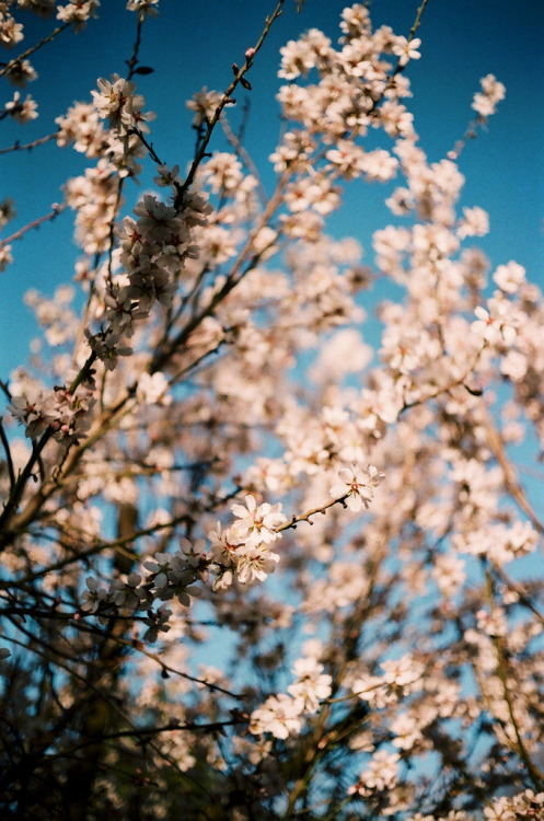 hellanne:  these blossoms are already gone (by jkrine)