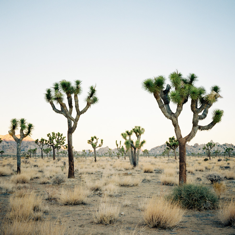 siousca:  Joshua Tree NP.
