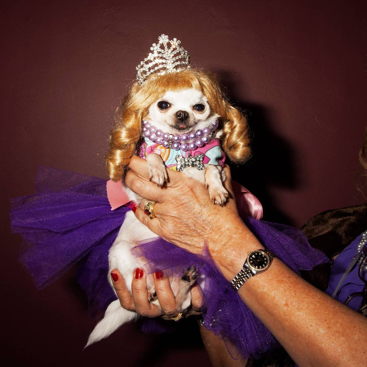 amylombard:  I photographed a dog beauty pageant for New York Magazine. Yes, it was amazing.