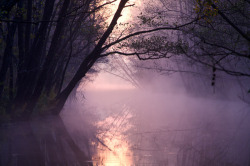 beautiful trees dream nature forest fantasy wonderland river escape fog fairytale pagan wicca