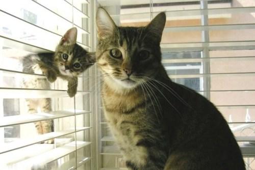 straker1980:  Moms & kittens.