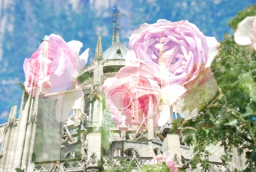 Notre Dame and Roses, Paris
