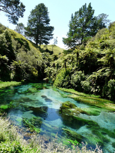 visitheworld:  Blue clear waters of Waihou River, New Zealand (by planmyplay).