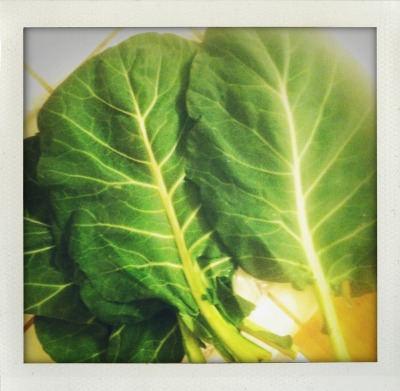 Check out these beautiful Swiss Chard leaves.  HUGE!  An amazing source of vitamins K, A, and C, magnesium, potassium, iron, and fiber.  And….would be incredible for making gluten-free wraps.