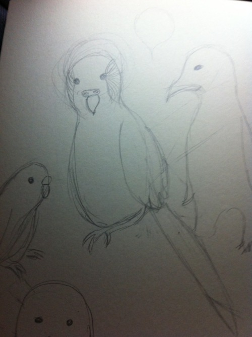 evercloseyoureyes:  Birds for Sylphee Did u kno that birds are my weakness? Because they are They are  I can't believe that I forgot to reblog this… These are still absolutely WONDERFUL!!