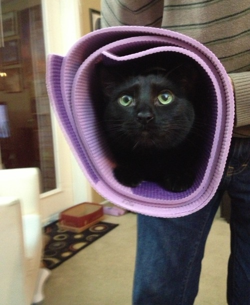 "getoutoftherecat:  get out of there cat. ""purrito"" is not a real yoga position."