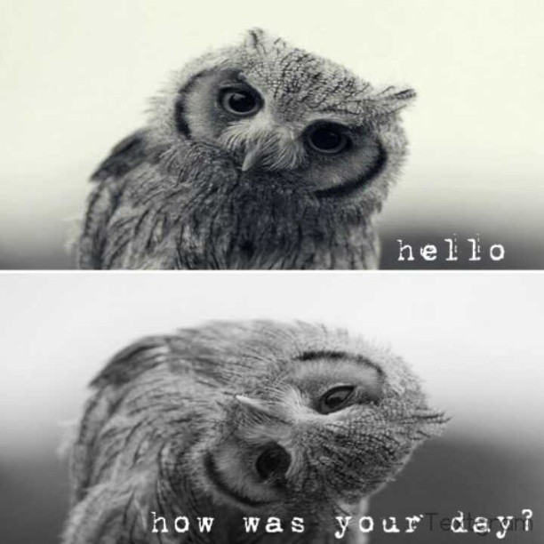 Hello people. :] #greet #owl #hello #day #blackandwhite