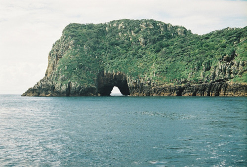 arquerio:  Blue maomao arch by angelgear on Flickr.
