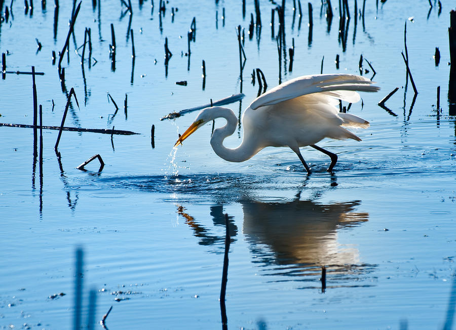 "On What Planet - Kenneth Rexroth I wasn't too sure what White Egrets were in the line ""White egrets stand in the blue marshes;"" so I looked it up and it definitely helped add to the imagery of the poem!"