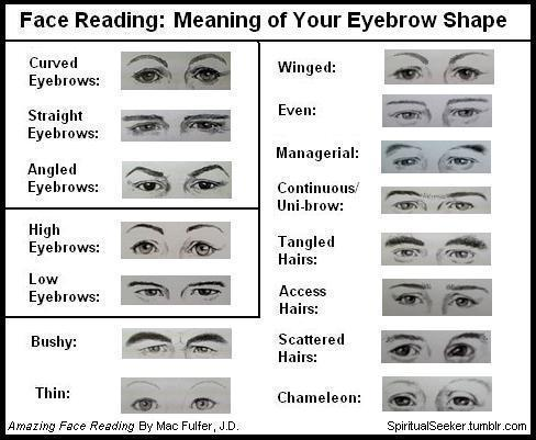Face Reading: What Your Eyebrow Shape Means Eyebrows = your mental outlook or point of view Even if you pluck, or draw on them, they still reflect the mental outlook that feels right for you. Most eyebrows do not exactly match each other: In this case, the left eyebrow = personal life, while the right eyebrow = our external world. Directions: Choose the eyebrow(s) that most looks like your own and enjoy reading about yourself Advice: Be open-minded about this. If you think this is bull-, then you must've ignored the details of each eyebrow example. Give it another chance and look at other people's eyebrow shapes besides your own, and see if they agree with their own explanation. BASIC SHAPES: Curved Eyebrows: Your mental focus is people-oriented. You connect & relate to the world best through your understanding of people. Sometimes you can understand an idea or theory better if it is explained to you in terms of a personal example or experience. It is best not to burden you with too much technical detail without showing you the real-world application (usefulness). Straight Eyebrows: Your approach is direct and factual, and you want the technical details. You appreciate logic, and you will need to be shown all the facts and available data before accepting something as true. You mentally evaluate the hard facts without letting emotion effect your judgement. Angled Eyebrows: If is important for you to stay mentally in control of any situation in which you find yourself. Gregarious and expansive, you may have good leadership qualities because few people will challenge your authority. You like to be right and usually are, having conscientiously done your homework. You stay mentally focused. POSITION: High Eyebrows: You are discerning, selective, and discriminating. You need time to observe and work out ideas completely before acting. You protect yourself with a wait-and-see approach. You need time to put new information for you to understand how you feel about the subject and how the parts relate to the whole. You store information with an emotional tab; by recalling the feeling, you can often recall the event with surprising clarity. You detest being put on the spot to make a snap assessment or to make a decision about something new before you have had time to reflect on it and understand it. Low Eyebrows: You are expressive, quick to take action and you process information quickly. You want to get the job done and do it now. You may have a tendency to interrupt others when they seem too slow to speak because you can often anticipate what they are going to say before they have finished saying it. You are initially optimistic but may become antagonistic if criticized. Your challenge is to develop more patience with others who dont have your gift of mental quickness. SPECIFIC TYPES: Bushy: You are a mentally active person, full of thoughts and ideas. Bushy eyebrows can indicate a powerful intellect. You are a non-stop thinker. Thin (like a pencil line): You are single-minded, focusing on one thing at a time. Your challenge is being overly sensitive to how you imagine others see you. You probably think they are more critical than they really are. You sometimes feel overly self-conscious. Winged (thick at beginning, becoming thinner at ends): You need to be on the planning committee! You love coming up with big, new ideas. Your visionary approach allows you to create exciting new plans, but your challenge is with follow-through. Delegate details to someone else to free yourself up to focus on your grand vision.  Even (same thickness throughout length): Your thoughts flow smoothly, evenly and you easily grasp whole concepts. Your challenge is developing a tolerance for other peoples difficulty with detail. By your mental standards, the rest of the world may seem slow or even unable to fully comprehend ideas. Managerial (thin at beginning, thicker at outer edges): You may be slow to start something new, but once a task is accepted, you have great follow-through. Mentally tidy, well-organized, and methodical, you do well in any roles that requires attention to detail and completion. You dot all the is and cross all the ts Continuous/Uni-brow: Your thoughts are continuous and restless. Your challenge is to learn to mentally rest and relax. If you have a problem, you may have trouble sleeping because you cant stop thinking. Meditation helps. Tangled hairs (eyebrow hairs tangle): Your wild eyebrows signal that you are an unconventional thinker whose thoughts range over many areas, This gives you the ability to see all sides of an issue, and you may enjoy playing devils advocate to discover hidden truths. Your unusual mind may also attract unwanted conflict. If youre getting more conflict than you want, try combing your eyebrows! Access hairs (hairs growing straight up at beginning): You have a strong connection between your inner feelings and your logical thinking. You have an ability to be aware of potential problems immediately. Access hairs on the right side indicate that you spot problems in business and the public area. On the left side, they indicate you anticipate (expect/predict) potential problems in relationships. Scattered hairs (single hairs outside of eyebrows): Your focus is wide ranging. You have a curious mind and are mentally drawn to many different topics. Each individual hair could almost be read as a separate mental interest. Your challenge is remaining focused on a single topic. Chameleon (nearly invisible eyebrows): Your eyebrows do not give you away. Others may think you are just like them, whether you are not. You can blend into almost any group and you may be a talented negotiator because you can extract more information than you reveal.  SOURCE: Amazing Face Reading By Mac Fuller, J.D. In fact, your whole face can be analyzed. The eyes, the pupils, the nose, cheeks, chin, jaw, forehead, dimples, lips, teeth, ears, profile…etc have meaning. This is why not everyone looks exactly the same.