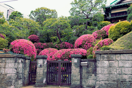 dreams-of-japan:  Traditional Japanese Landscaping, Yoyogi Uehara by tokyofashion on Flickr.