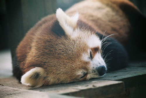 lafleurdesmurailles:  Nap time by Adam Harley on Flickr.