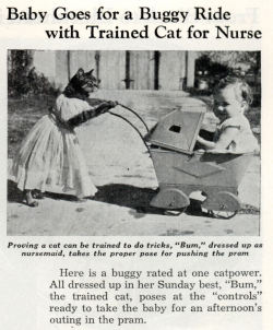 "weirdvintage:  ""Bum"" the nursemaid kitty, 1938 (via Modern Mechanix)"