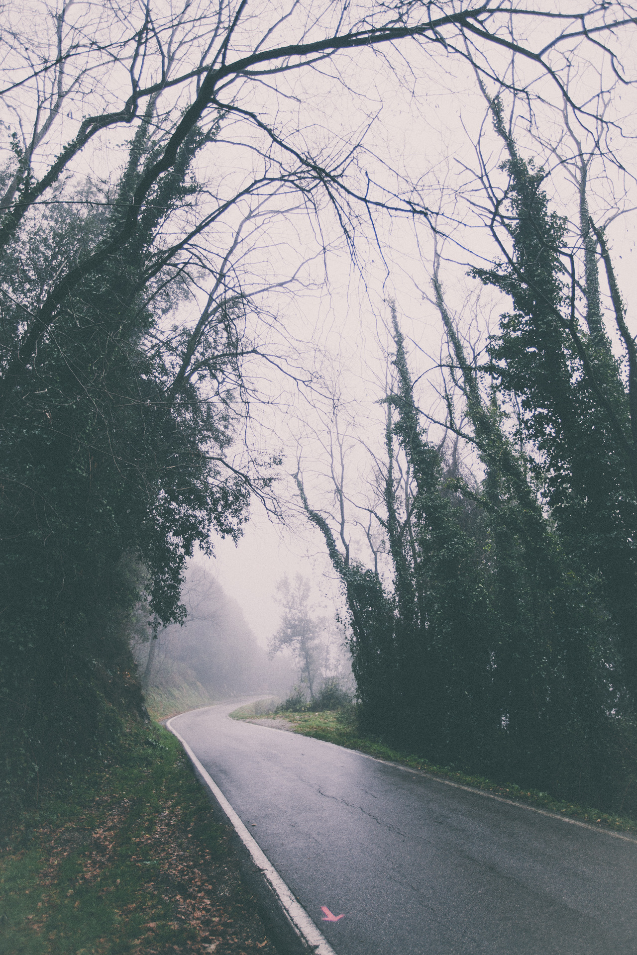 elenamorelli:  { chasing the mist // do not follow the pink arrow }