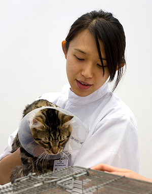 Are our furry friends (like this one in the cone of shame) making our vets sick? New research
