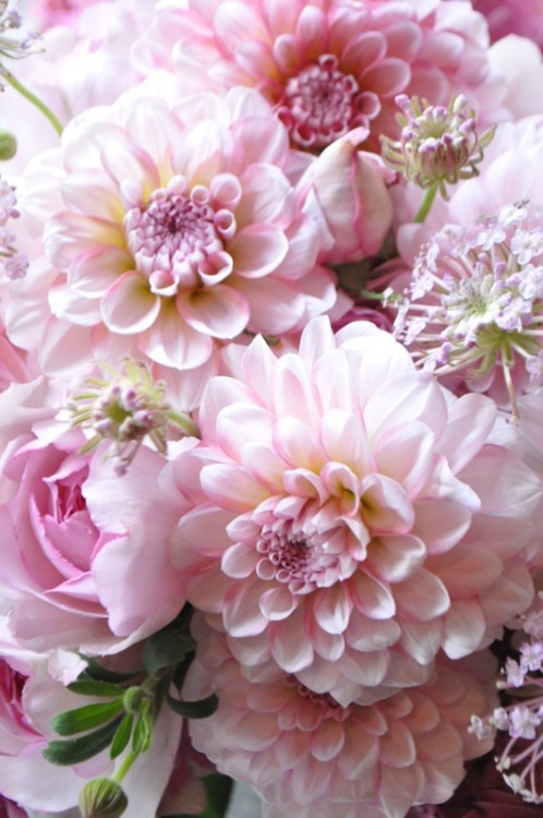 Flowers  on We Heart It - http://weheartit.com/entry/61576261/via/shannchristiee   Hearted from: http://m.pinterest.com/pin/211387776231433459/