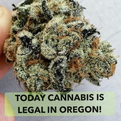 shouts-out-to-oregon-hmj