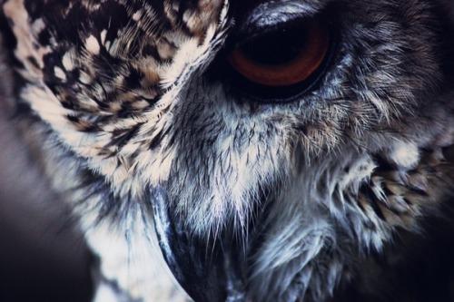 animals animal favorite nature bird wildlife owl wild vertical