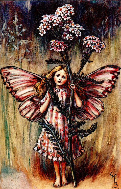 lunafairy:  The Yarrow Fairy by C. M. Barker