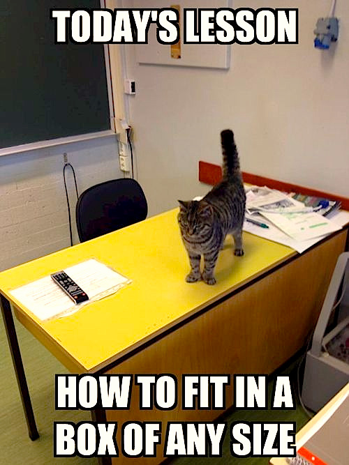 Today's Lesson Photo via Funny Cat