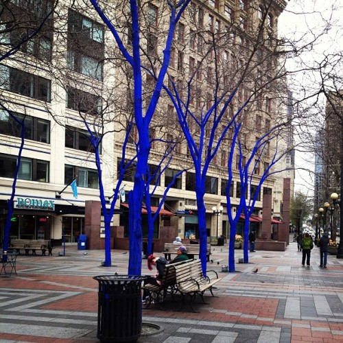 candicesmart:  #seattle #blue #trees