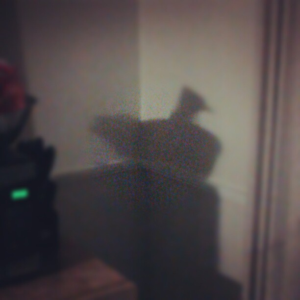 Look at my wall… #chickenshadow #funny #weird #wtf