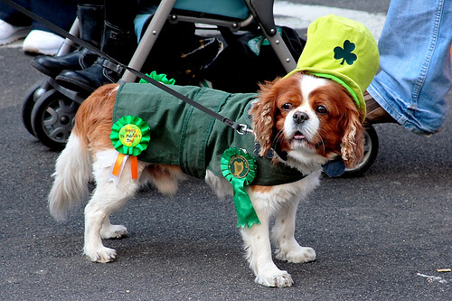 Lá Fhéile Pádraig Sona Duit, Happy St Patrick's Day… More on St Patrick's Day by Somewhere in the world today…