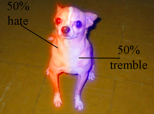 lobotomyfail:  The anatomy of a Chihuahua.