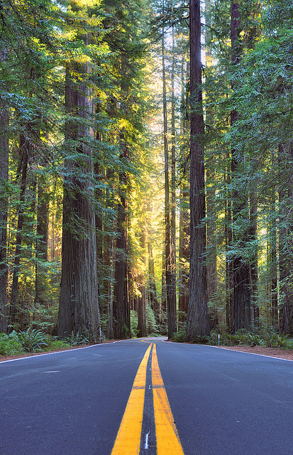Avenue of the Giants by D.H. Parks on Flickr.