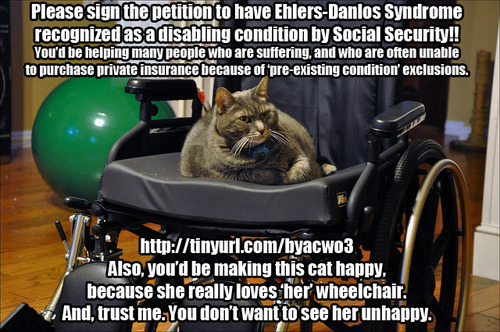 "[image: Chubby, angry-looking cat sitting in a wheelchair.  Text reads: ""Please sign the petition to have Ehlers-Danlos Syndrome recognized as a disabling condition by Social Security!! You'd be helping many people who are suffering, and who are often unable to purchase private insurance because of 'pre-existing condition' exclusions. http://tinyurl.com/byacwo3 Also, you'd be making this cat happy, because she really loves 'her' wheelchair. And, trust me. You don't want to see her unhappy.""] Please feel free to grab and re-post this image anywhere — I am hoping that if we can get enough people on Flickr/FB/Twitter/LJ/DW/G+ to share the petition link, we can reach our goal of 25,000 signatures by January 2, when the petition expires. Thanks SO much for your support! Ehlers-Danlos Syndrome can have a devastating effect on your life and health. It can be, quite literally, crippling. Some people with EDS need braces to hold their heads upright, because their neck can't support the weight of their skull. Charlie is a Canadian man currently fighting medical bureaucracy trying to get appropriate treatment for his severe EDS. And, yet, it's nowhere to be found in any of the U.S. government/Social Security listings of diseases which can be considered as a disability (based on degree of impairment.) Yes, it's a rare disease — but not as rare as many of the ones on Social Security's listings of disabling conditions. Many patients with EDS been told by doctors that they'd vaguely heard of EDS in medical school, but had never seen a patient with it. In part, that's because it's uncommon — but other people go undiagnosed for years because doctors miss the signs that could have gotten them appropriate treatment and saved their mobility. Please sign and signal-boost, if you would be willing."