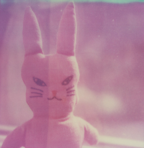 xoazuree:  Bad Bunny.  This rabbit is actually true to this shade of pink. I miss you, PX70 PUSH! Chicago, IL