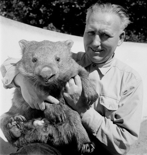 jumpybunnyfox:  40 years as zoo keeper Wombat Source