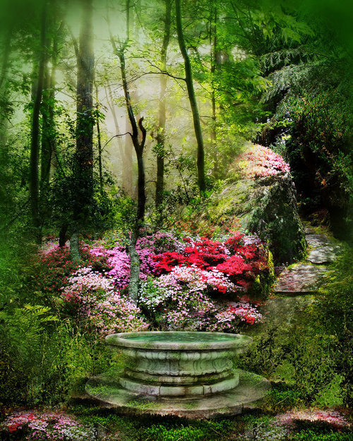 Wishing Well, The Enchanted Forest photo via api