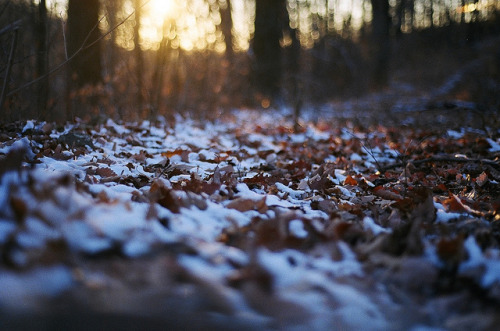 tobecaughtadrift:  Frost Bitten by Alexandra Davie on Flickr.