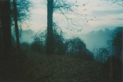 photography film vintage trees indie Grunge dark forest disposable 35mm analog analogue dark vintage orbitae