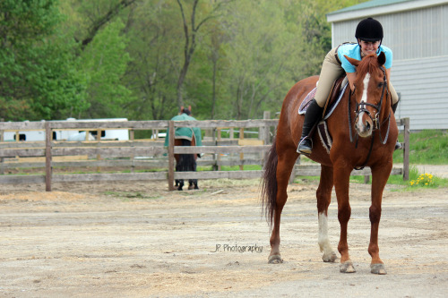 horse-n-around:  equestrian617:  Richie <3 photo by horses-and-hope  i love this so much