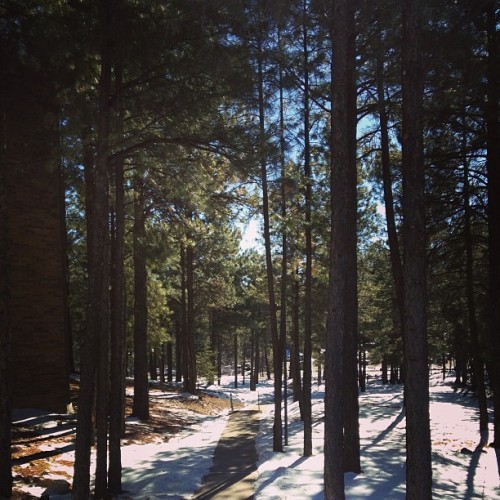 Behind my residence hall #nau  #flagstaff  #beautiful